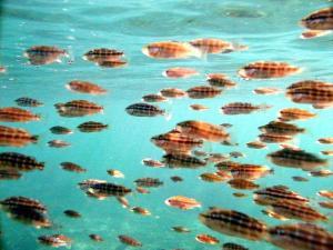 Soru 4: Balık'ların insanları baştan çıkarmak üzere bir takım oyunlara başvurduğunu belleten dinsel kurallara inanır mısınız?