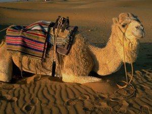 Tartışma yaratan hadis: Karınıza deve gibi çullanmayın